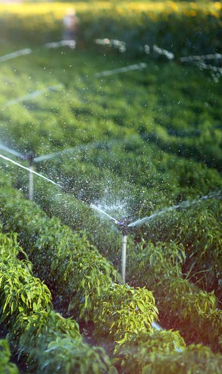 Luna Lawn Care Services LLC Residential Irrigation System Repair