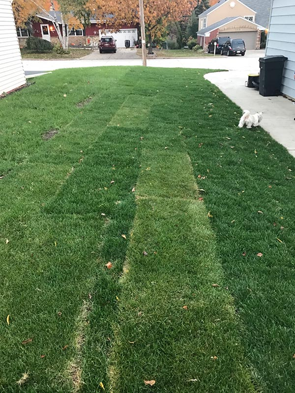 Luna Lawn Care Services Residential Sod Installation